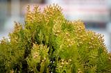 花粉対策網戸