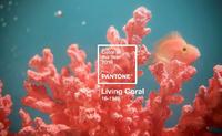 livingcoral.png